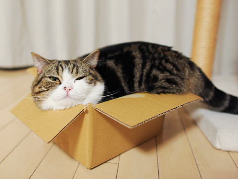 Maru et son amour des boîtes