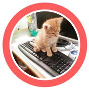 Photo d un petit chat roux sur un clavier